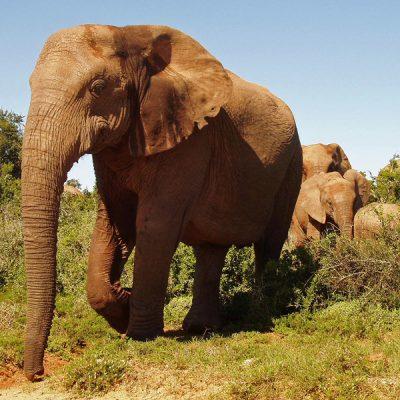 Rondreis Kleurrijk Afrika olifant