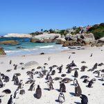Verrassend Zuid-Afrika